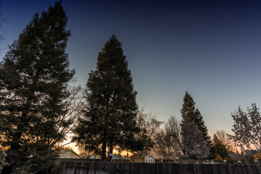 backyardtreesatsunset-pixrly.com_